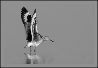 BW-Willet-May Haga