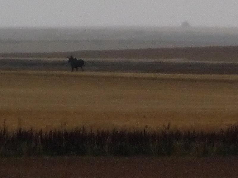 TR-Foggy Prairie with Moose-Richard Kerbes