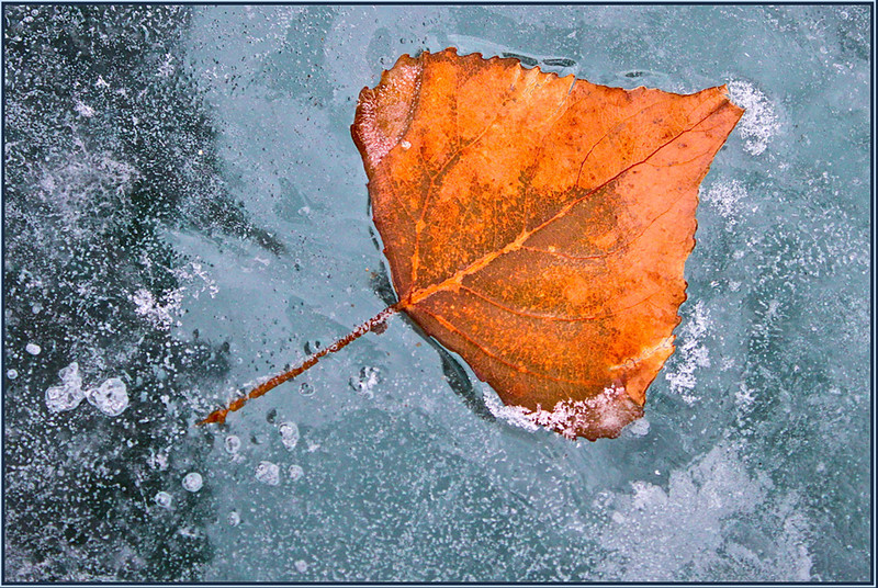 TR Print-Frozen In Time-Betty Calvert