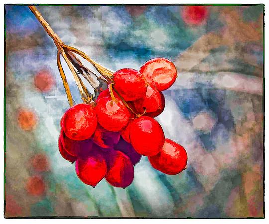 AR-Cranberries-Brian Barnhill