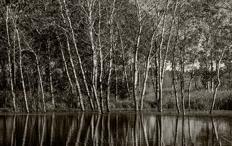 BW-After the Flood-Barry Singer