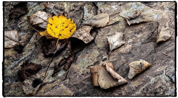 TR-A Bit of Yellow-Brian Barnhill