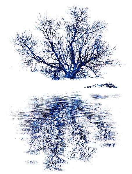 Print-AR-Winter Blues-Barry Singer