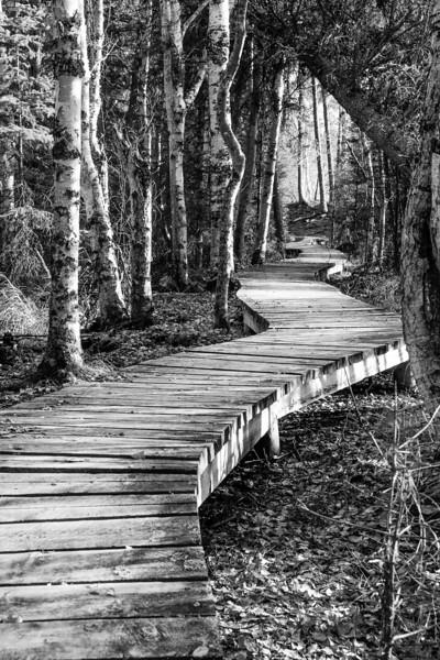 Print-BW-The Path-Jannik Plaetner