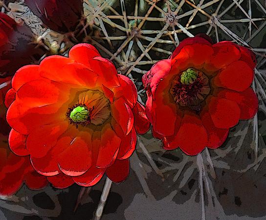AR-Claret Cup Cactus-Kathy Meeres