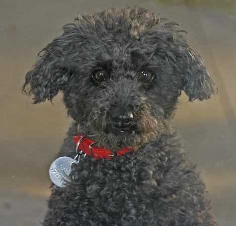 PO-Winnie The Wonder Dog-Ian Sutherland