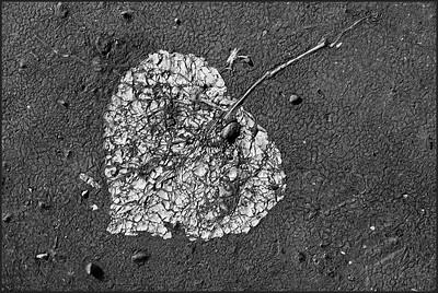 BW-Leaf in Asphalt-Betty Calvert