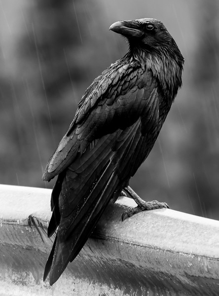 BW-Cold and Wet-Bob Littlejohn