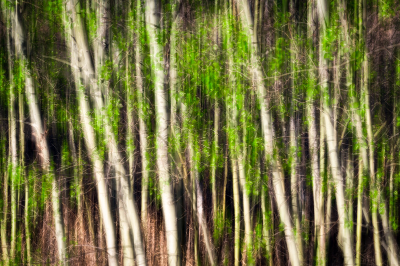 1Print-AR-The Colour of Spring-Michael Murchison