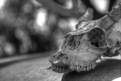 BW-Skull-Dave Waldner