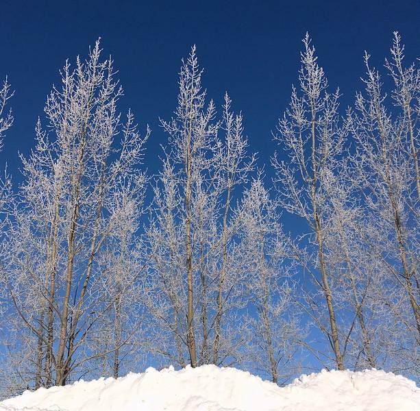 TR-Brad's Trees-Richard Kerbes