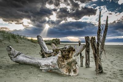 TR-Driftwood Art-Bob Holtsman