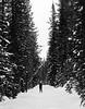 BW-Listening to Spruce in Snow-Richard Kerbes