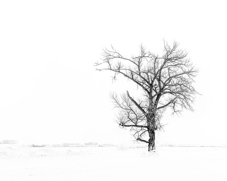 BW-A White Out Kind of Day-Char McGregor