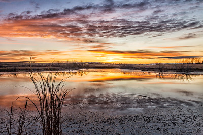 TR-Morning, God's Daily Gift-Char McGregor