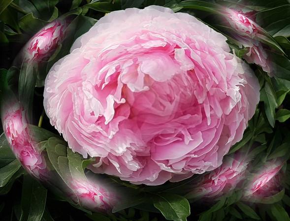 AR-Bouquet-Helen Brown