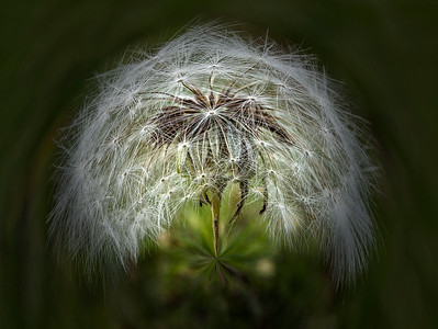 AR-Seeds-Barry Singer