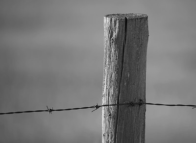 BW-Fence Post-Ian Sutherland