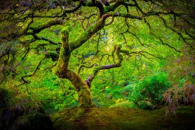 1Print-TR-Tree of Serenity-Cheryl Lalonde