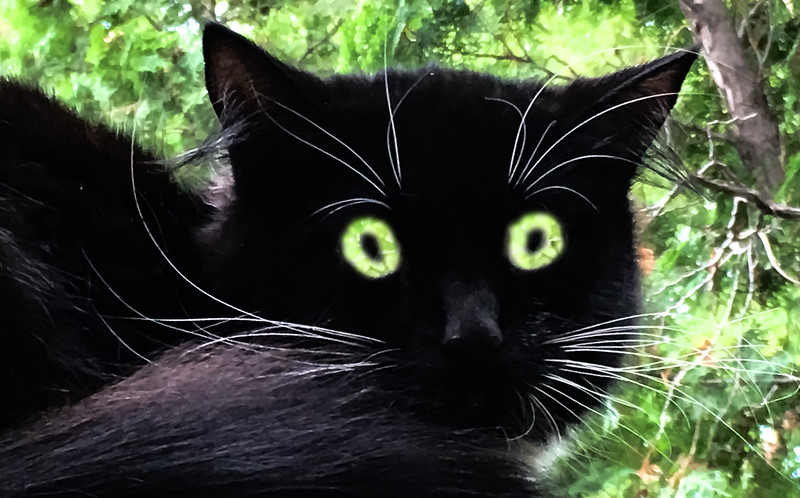 2-Evil Eye-Richard Kerbes