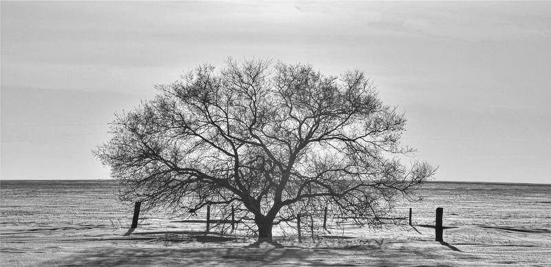 2-A Prairie Tree-Helen Brown
