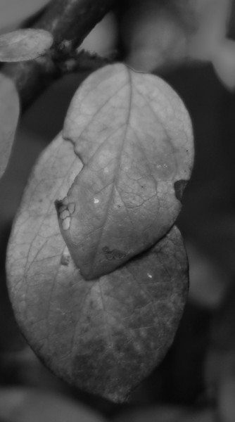 2-Leaves Of Yesterday-Maurice Vold