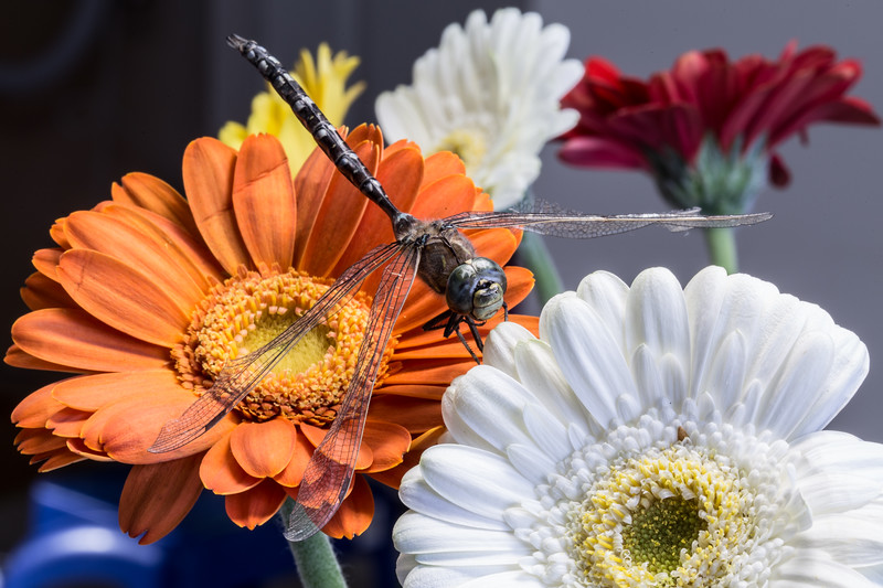 2-Flowers And Dragonfly-Rhea Preete
