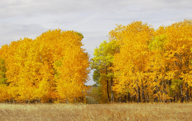2-Fall Pathway-Norman Buker