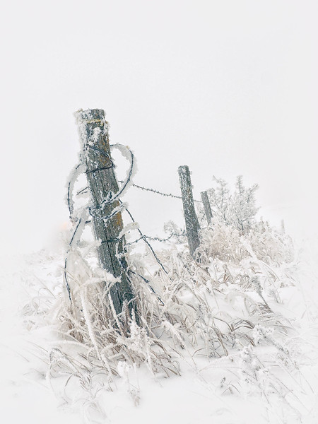 2-Fog, Frost And Fence-Rae McLeod