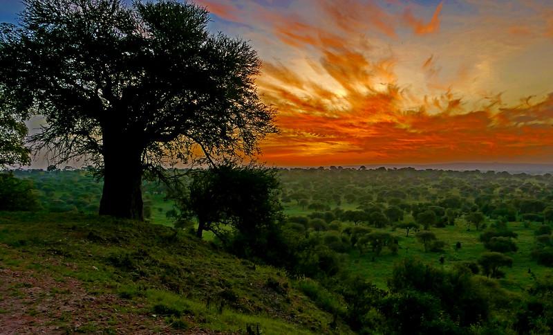 2-Tarangire Sunrise-Gayvin Franson