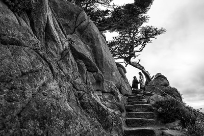 Proposal Photography at Point Lobos in Carmel