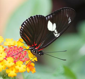 Papillonerie at Ferme Guyon