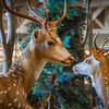 Deer Season<br />  I went deer hunting the other week and shot these two deer. I went hunting for something interesting to shoot and found these two deer at a local Bass Pro shop.
