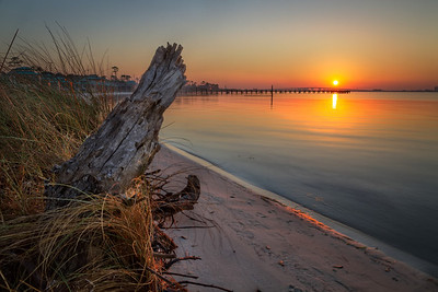 Stump on a Beach
