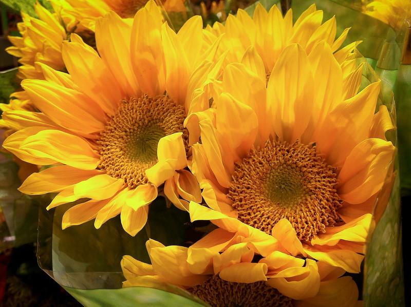 Big Yeller Flowers