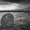 Black and white image of hay bales in a field in Richmond, TX.