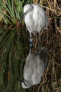 Animals, Birds, Egret, Little Egret, Marwell Zoo, Walkthrough Aviary @ Marwell Zoo, City of Winchester,England