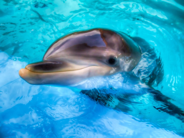 Hungry Dolphin