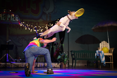 Frisbee Dog For the last day of my church's Vacation Bible School,  they brought in some high flying frisbee dogs to entertain the kids.
