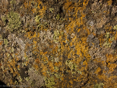 Lichen on the rocks at the top of Mt Wellington