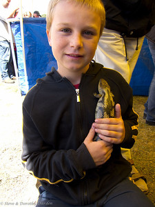 A young boy showed us how to hold a Blotched Blue Tongue Lizard.