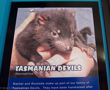 The wildlife park is also a sanctuary for endangered Tasmanian Devils.