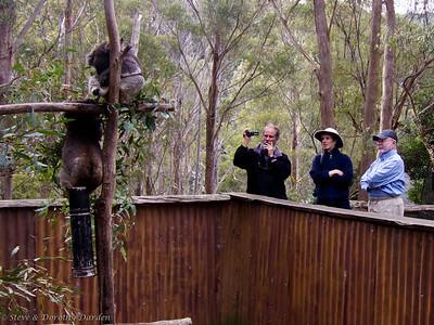 Guy, Karen, Steve and the Koalas