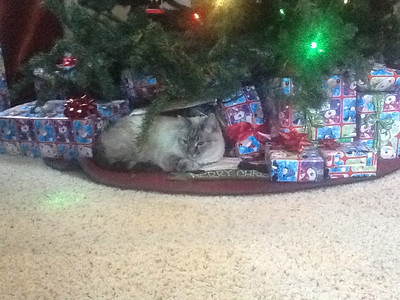 One of Ninja's favorite sleeping spots....nestled in with presents!