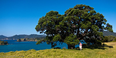 Steve beneath one of our favorite Pohutukawa trees on Urupukapuka Island