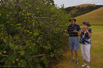 Adrian and  Josephine getting into  the figs at Te Pahi Islands