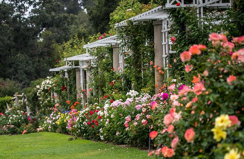 Huntington gardens-15