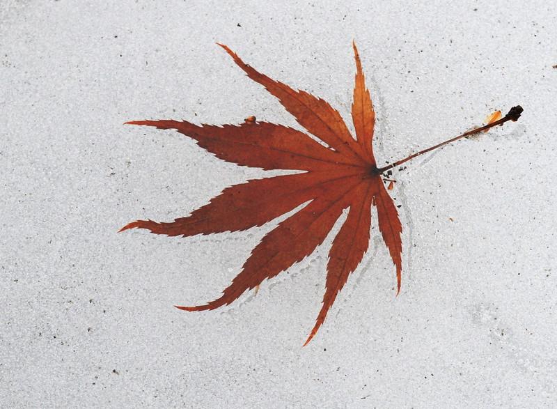 Maple On Ice