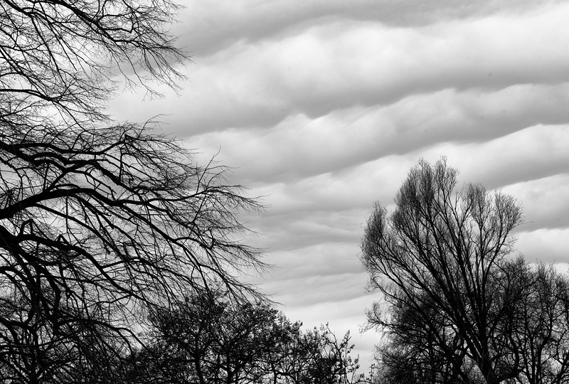 Clouds Over the Botanic Garden