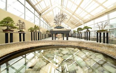 Bonsai Museum Reflections